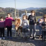4 santa klara zumaia poni horse caballo