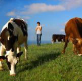 5 Santa Klara Zumaia Vaca Behia cow 2