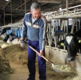 6 Santa Klara Zumaia Vaca Behia cow